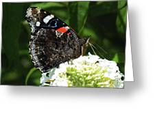 Red Admiral - Underside Greeting Card