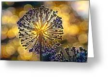Red Allium Flower Greeting Card