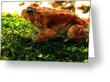 Red American Toad Greeting Card
