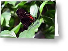 Red And Black Butterfly In The Garden Greeting Card