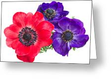 Red And Blue Anemone Flowers  Greeting Card
