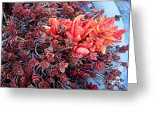 Red And Burgundy Succulent Plants Greeting Card