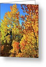 Red And Golden Aspens In Dillon Co Greeting Card