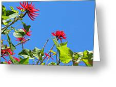 Red And Green San Diego Flowers Greeting Card