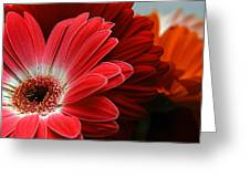 Red And Orange Florals Greeting Card