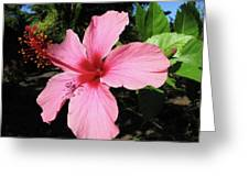 Red And Pink Fireworks Greeting Card
