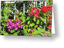 Red And Purple Flowers Greeting Card