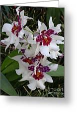 Red And Purple Orchids Greeting Card