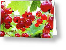 Red And Ripe Greeting Card