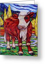 Red And White Bull Calf Greeting Card