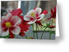 Red And White Flower Greeting Card