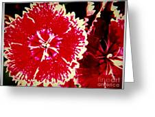 Red And White Mum Greeting Card
