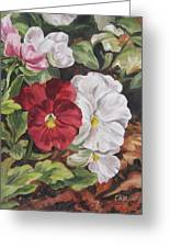 Red And White Pansies Greeting Card