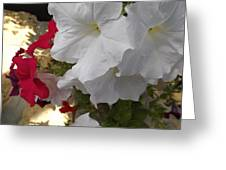 Red And White Petunias Greeting Card