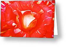 Red And White Rose In Puerto Varas-chile Greeting Card