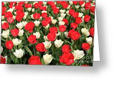 Red And White Greeting Card by Tracy Hall