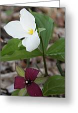 Red And White Trillium Greeting Card