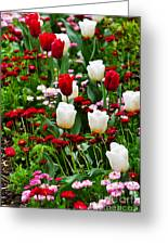 Red And White Tulips With Red And Pink English Daisies In Spring Greeting Card