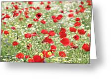 Red And White Wild Flowers Spring Scene Greeting Card