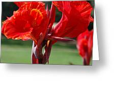 Red And Yellow Asiatic Lilies Greeting Card