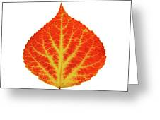 Red And Yellow Aspen Leaf 10 Greeting Card