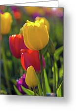 Red And Yellow Tulips Closeup Greeting Card