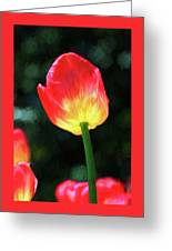 Red And Yellow Tulip - Photopainting Greeting Card