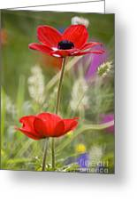 Red Anemone Coronaria In Nature Greeting Card