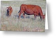 Red Angus Cow And Calf Greeting Card