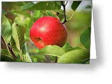 Red Apple On A Tree Greeting Card