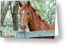 Red At The Fence Greeting Card