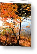 Red Autumn Leaves 5 Greeting Card