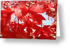 Red Autumn Leaves Art Prints Canvas Fall Leaves Baslee Troutman Greeting Card
