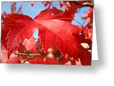 Red Autumn Leaves Fall Art Colorful Autumn Tree Baslee Troutman Greeting Card