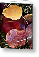 Red Autumn Leaves Greeting Card