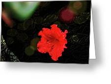 Red Azalea Greeting Card
