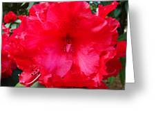 Red Azaleas Flowers 4 Red Azalea Garden Giclee Art Prints Baslee Troutman Greeting Card