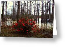 Red Azaleas In The Swamp Greeting Card