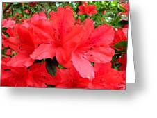 Red Azaleas Greeting Card