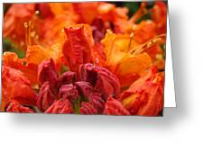 Red Azaleas Orange Azalea Flowers 9 Floral Giclee Art Prints Baslee Troutman Greeting Card