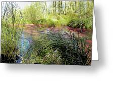 Red Azolla Greeting Card