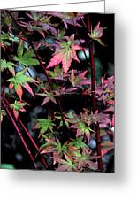 Red Bark Maple  Greeting Card