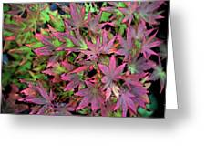Red Bark Maple Leaves  Greeting Card