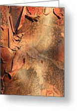 Red Bark Nature Abstract Greeting Card