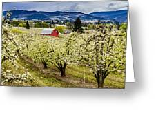 Red Barn And The Pear Orchards Greeting Card