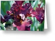 Red Bearded Iris Photograph Greeting Card