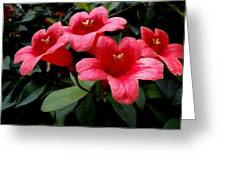 Red Bell Flowers Greeting Card