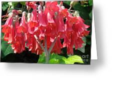 Red Bell Flowers. Sunny Spring Greeting Card