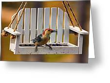 Red Bellied On Swing - 5 Greeting Card by Bill Tiepelman
