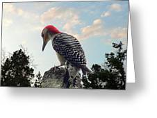 Red-bellied Woodpecker - Tree Top Greeting Card